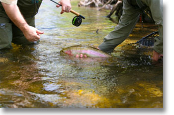 Imagine wading a beautiful riffle, learning to fly fish while catching wild and feisty Brown, Rainbow & Cutthroat trout